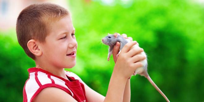 Organic and Natural Pet Care